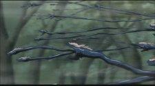 Змеиная сеть