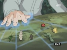Сбор насекомых