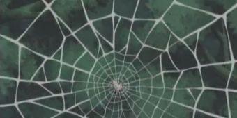 Цветок паучьей сети